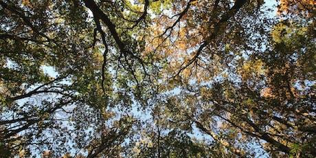 Aux Pieds de Nos Arbres - Rencontre Créative & Ecologique billets