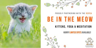 (Gold Coast) Be in the Meow - Kitten Yoga