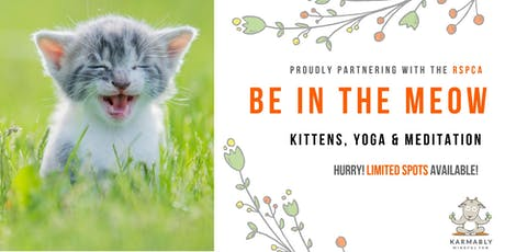 (Gold Coast) Be in the Meow - Kitten Yoga tickets