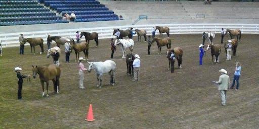2019 South Carolina State 4-H Horse Show