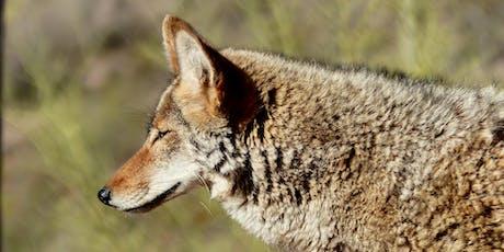 Coexister avec le coyote billets