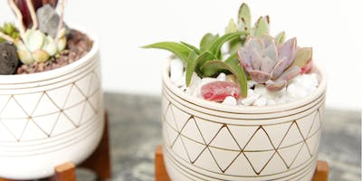 """Swig and Dig """"Modern Succulent Garden"""" in Pot Stand"""