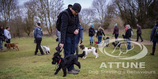 Group Walk 6 Months and up, Socialise + Train