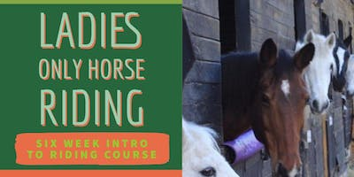 Ladies Only Horse Riding Summer Course