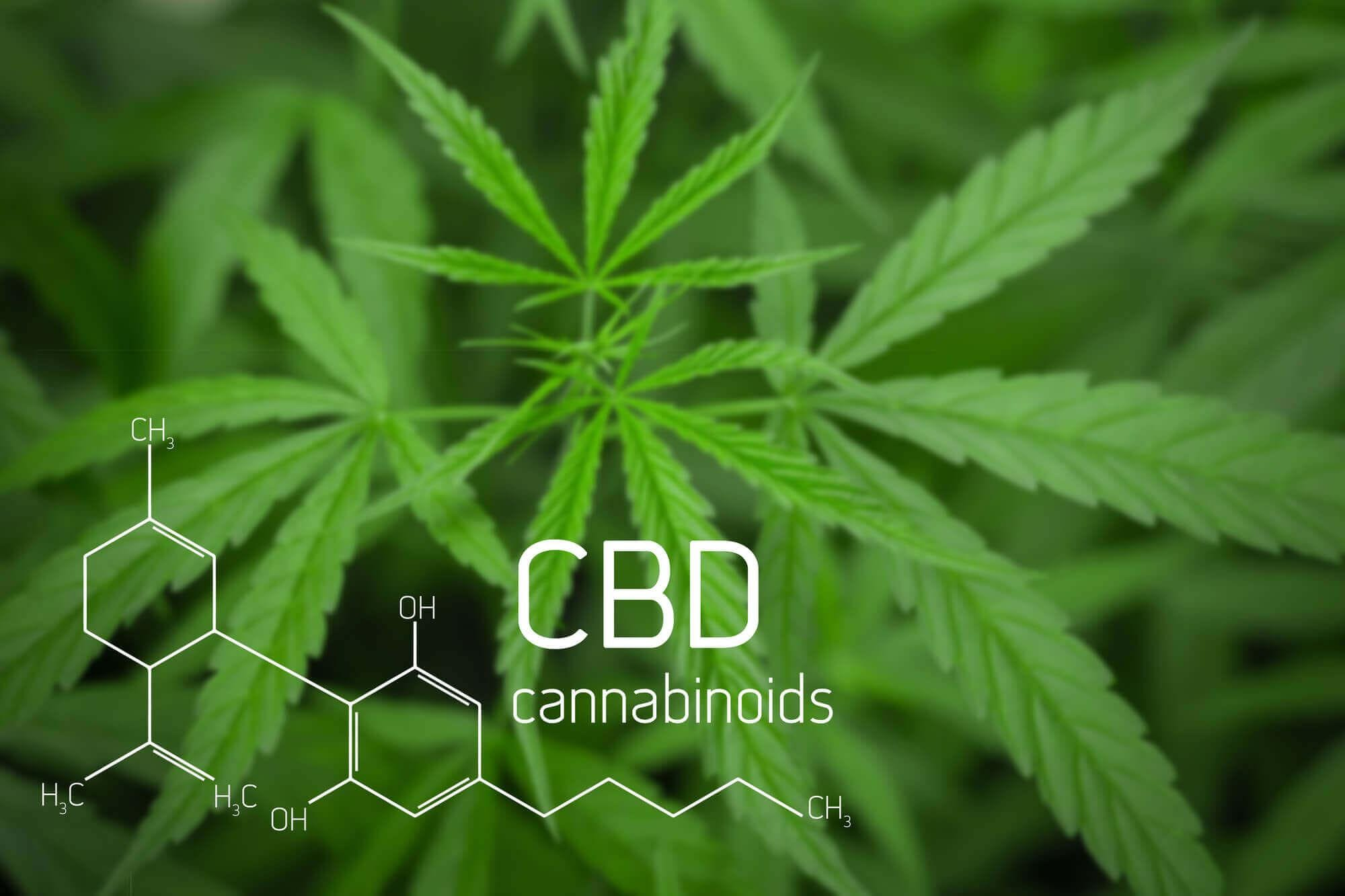 CBD Health & Wellness Business Opportunity (Join for FREE)  - Los Angeles, CA