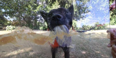 HungryDog: The Canine Peanut Butter Eating Competition!