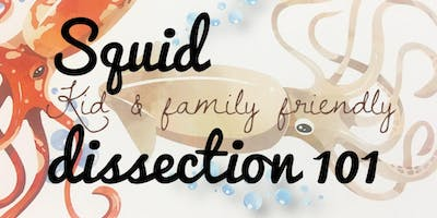 Squid Dissection 101