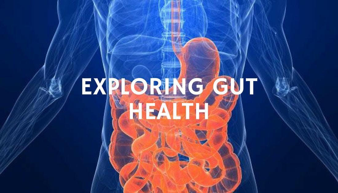 Gut Health and Hormones Seminar