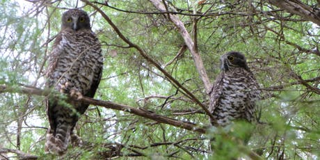 Powerful Owl Information Evening tickets