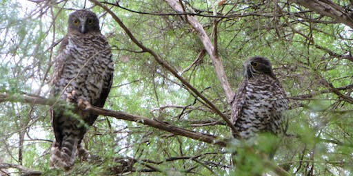 Powerful Owl Information Evening