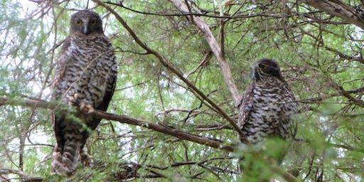 Powerful Owl Information Evening
