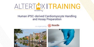 Human iPSC-derived Cardiomyocyte Handling and Assay Preparation