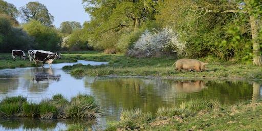 Knepp wildlife visit:  A walk on the wild side
