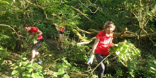 St Nicks Evening Conservation Group - Himalayan Balsam Clearance