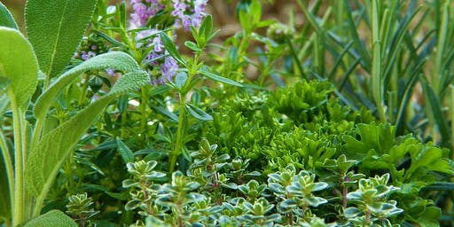 Kitchen Botany: Exploring Plants in the Kitchen!