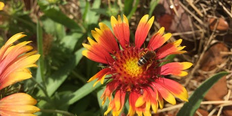 Planting to Attract Pollinators in Your Garden tickets