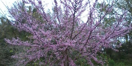 Caring for Trees in the Home Landscape tickets