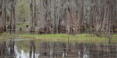 Wetlands Explorers Tour