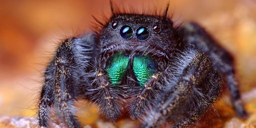 CANCELED-Horticulture Spotlight Series: All About Spiders!