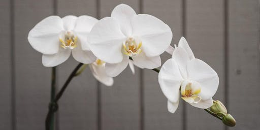 FREE Orchid Repotting Demo