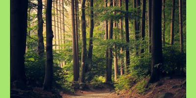 """FOREST THERAPY SHINRIN-YOKU - """"Discover You"""""""