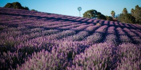 2019 Monte-Bellaria Lavender June Bloom Event tickets