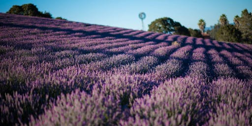 2019 Monte-Bellaria Lavender June Bloom Event