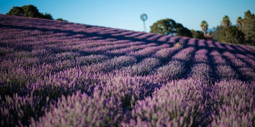 2019 Monte-Bellaria Lavender July Bloom Event