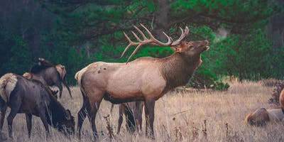 Plan Your Hunt: Scouting for the Upcoming Season