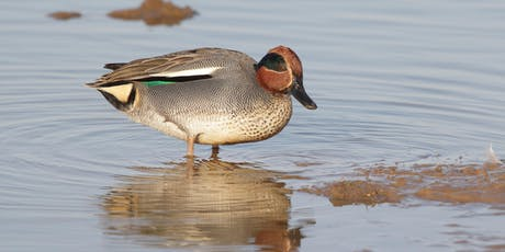 Winter Wildfowl ID course tickets