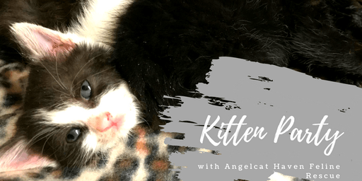 Angelcat Haven Kitten Party June 30th