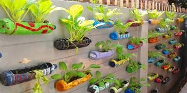 Recycle Kitchen Garden