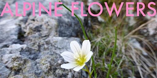 Mountain Flowers of Snowdonia