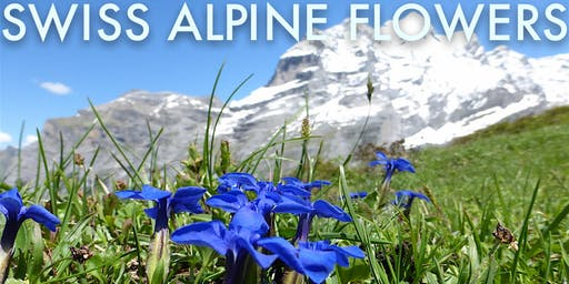 Alpine Flowers in the Swiss Alps