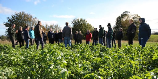 Field Lab: Plant Teams. Heritage grains and crop innovation for crofters