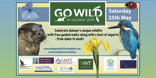 Go Wild in Galway - 25th May 2019