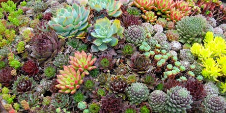 Sassy Succulents at Thorncreek Winery Terrarium Style tickets