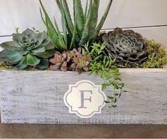 Premier: Spring Succulent Centerpiece Garden