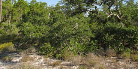 EcoWalk: Scrub Stroll: South Venice Lemon Bay Preserve tickets