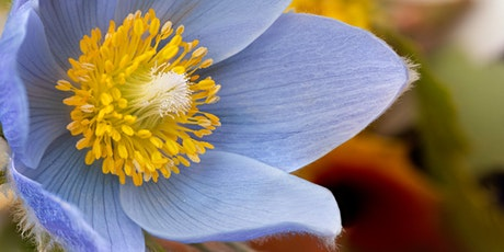 Colorado Wildflower Photography Workshop tickets