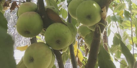 Fruit Tree Pruning Workshop tickets