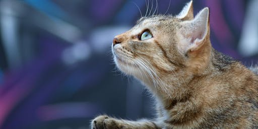 The 2019 ISFM Asia Pacific Feline Congress