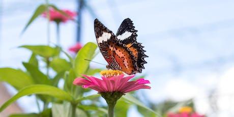 Parks for Pollinators BioBlitz tickets