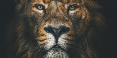 Cannes+Mobile+Lions%2719