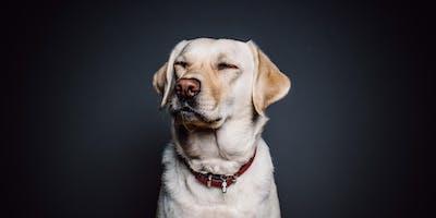Top Dog Film Festival - Porthcawl - 13 November 2019
