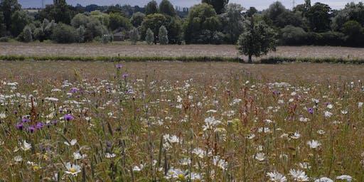 Wildflower Walk