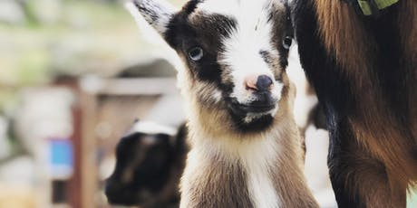 Orion Farms Yoga with Goats tickets
