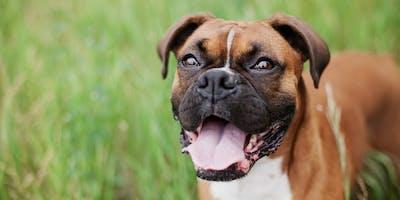 ECG's in Review for Veterinary Technicians