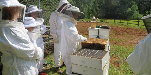 Youth 4-H Beekeeping Camp