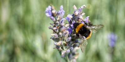 Talk, Creating Bee Friendly Backyards - 4 National Cct